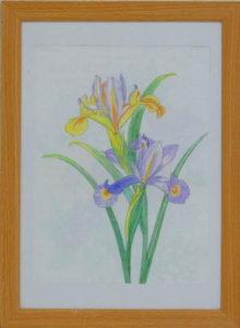 花(大人のぬり絵)